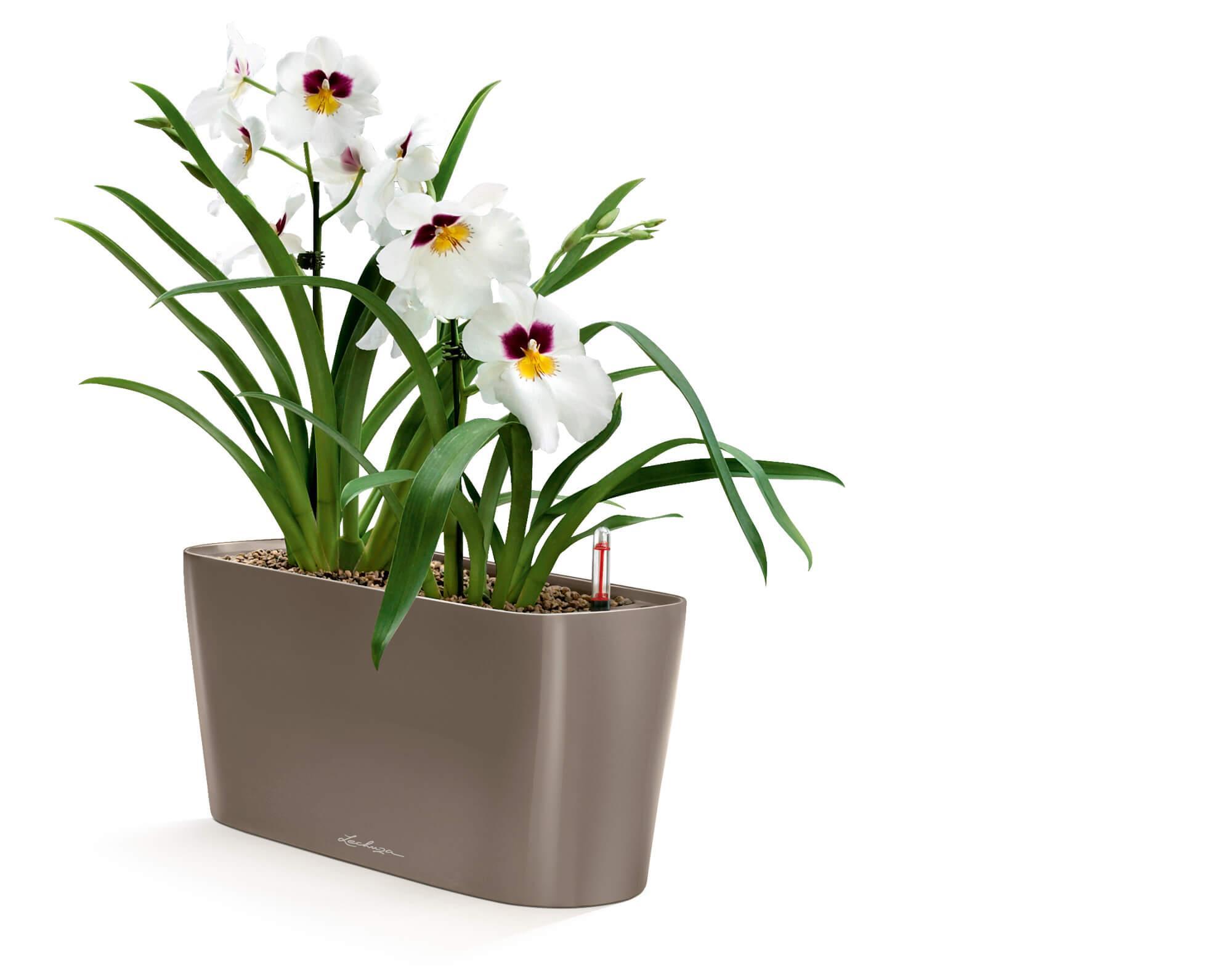 Conseils Et Astuces Pour Prendre Soin Des Orchidees