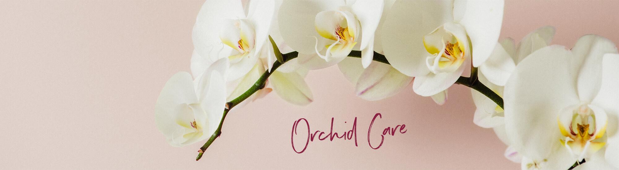 le_tw-orchideen_header