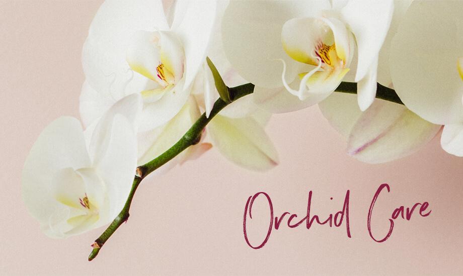 le_tw-orchideen_header_s