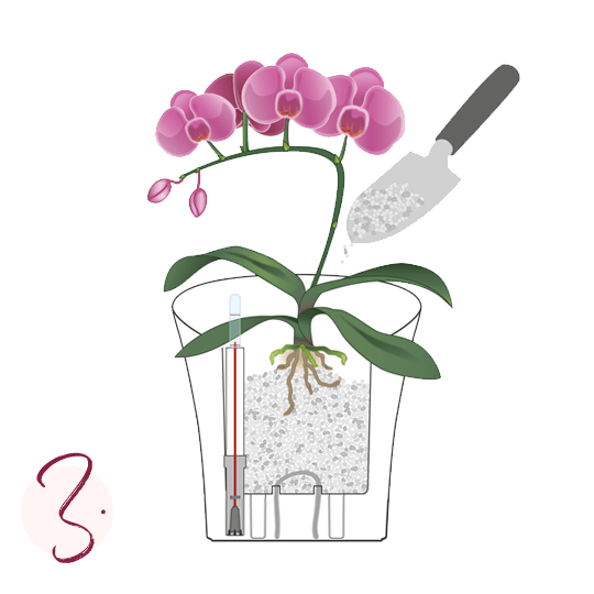Repotting orchids Step-by-step guide Step 3