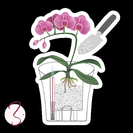 Trasplante de orquídeas Instrucciones de plantado paso 3