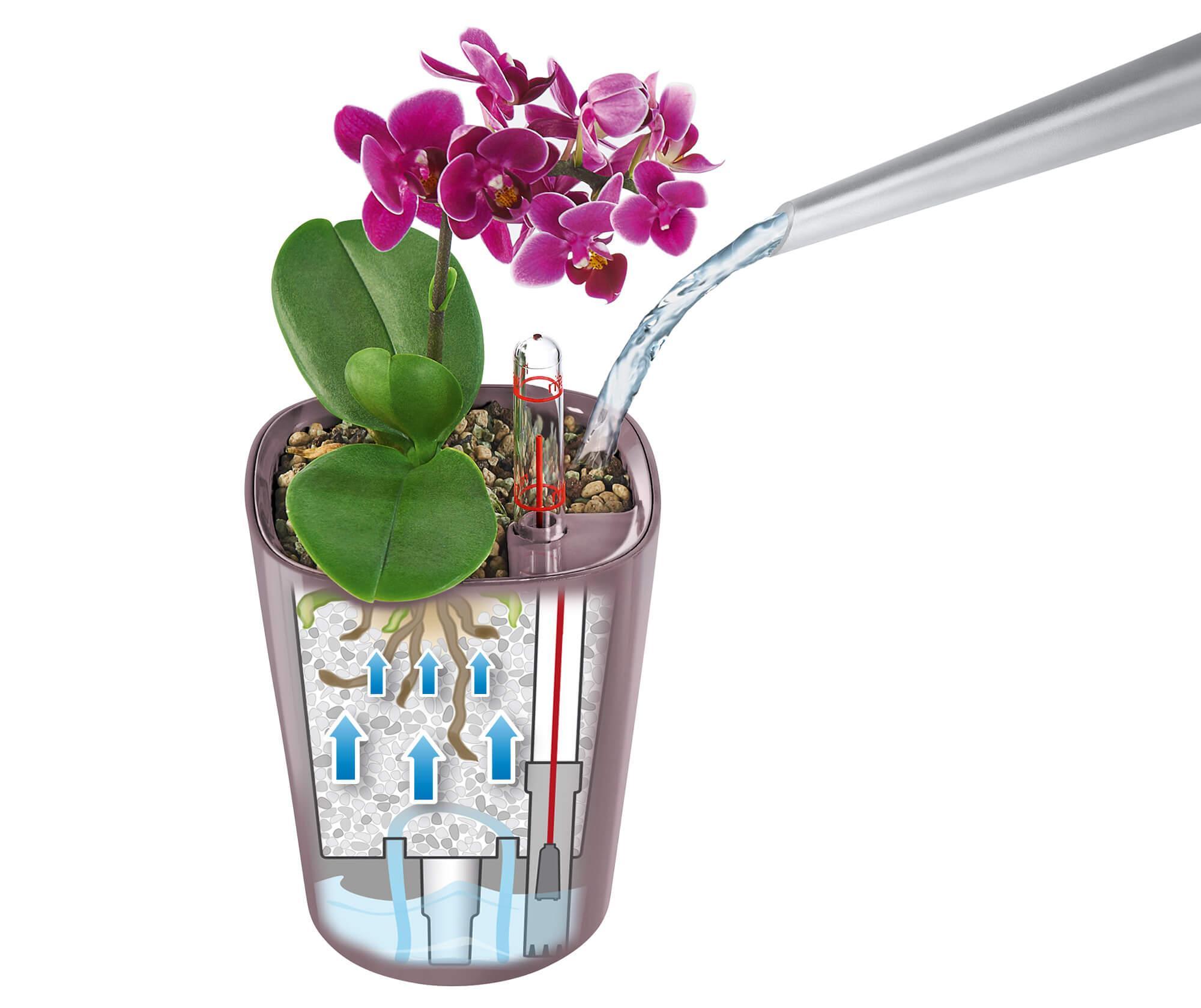le_tw-orchideen_minideltini_bewaesser