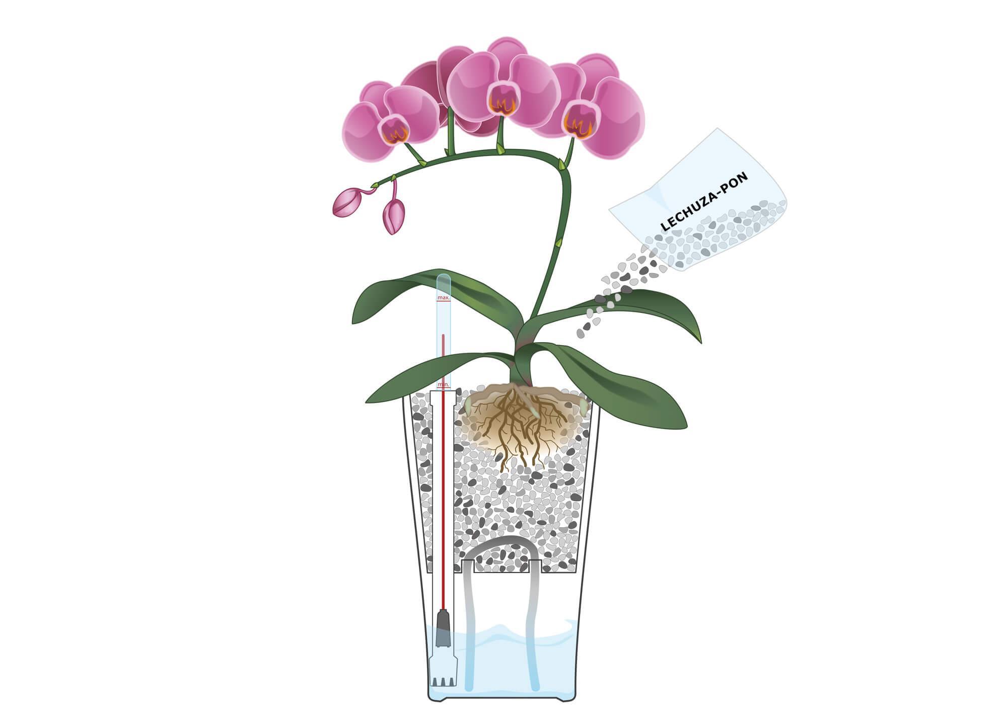 Schritt 3 Pflanzanleitung mit Orchidee