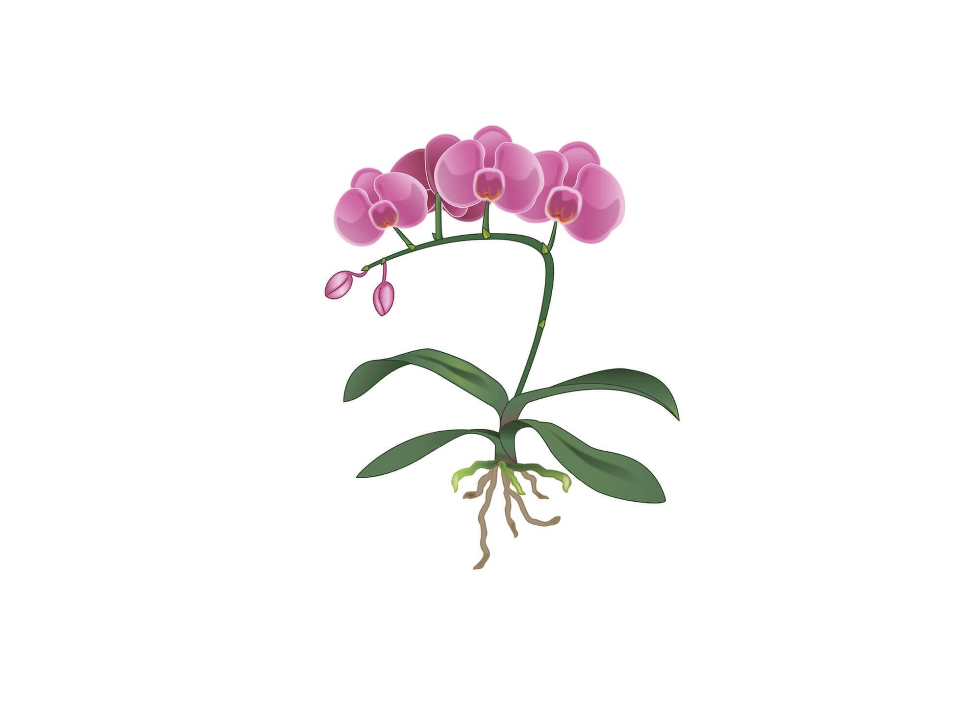 Schritt 2 Pflanzanleitung mit Orchidee