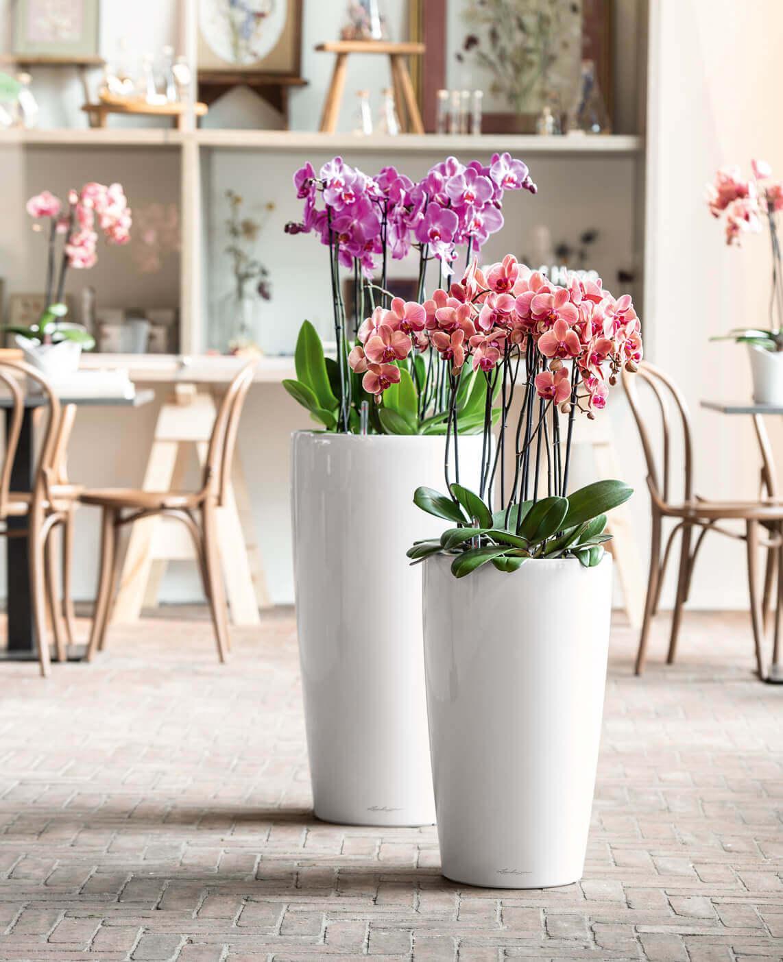 conseils et astuces pour prendre soin des orchid es. Black Bedroom Furniture Sets. Home Design Ideas