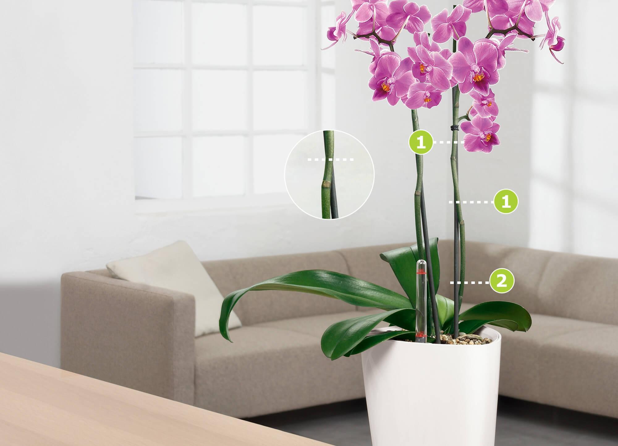 le_tw-orchideen_rueckschnitt