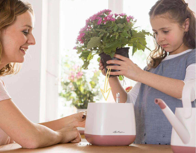 Zo eenvoudig kan de verzorging van planten zijn Stap 2