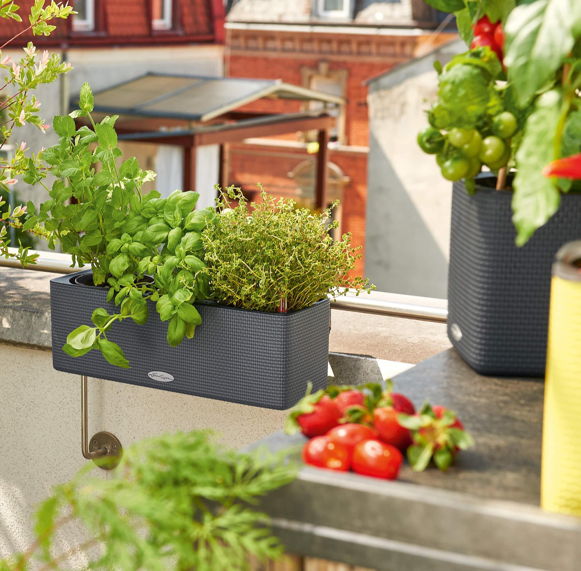 le_tw-urban-gardening_balconissima_gr