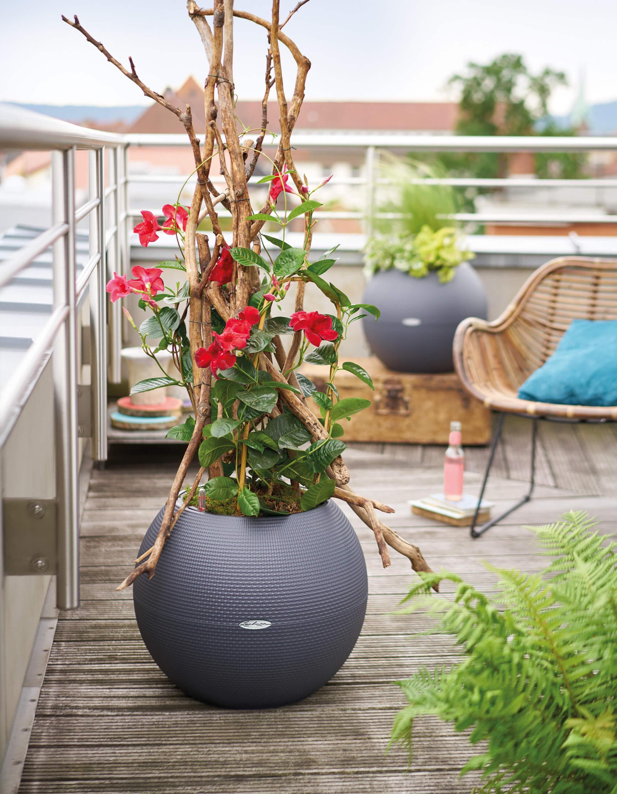 le_tw-urban-gardening_puro50_gr