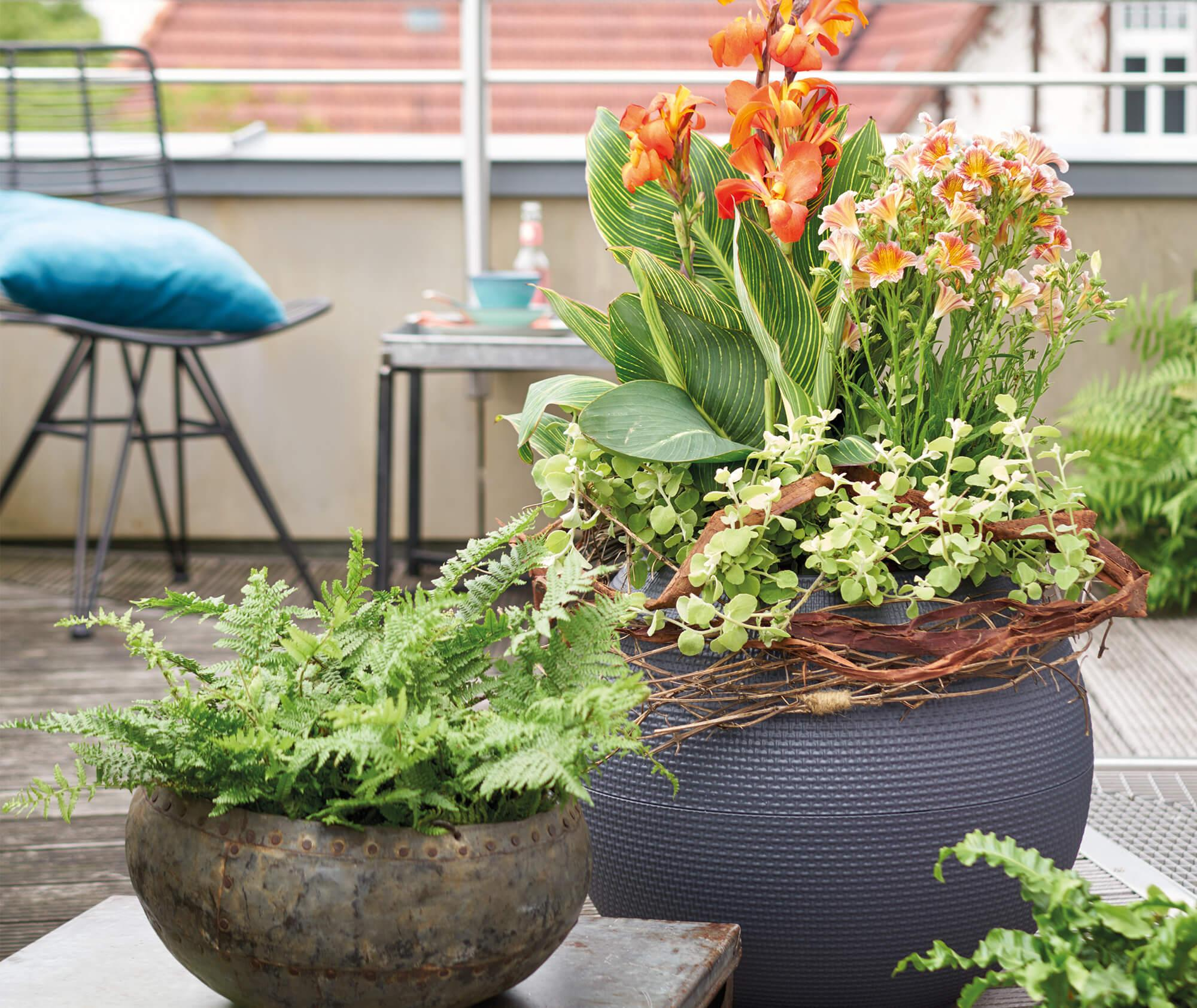 le_tw-urban-gardening_puro_gr