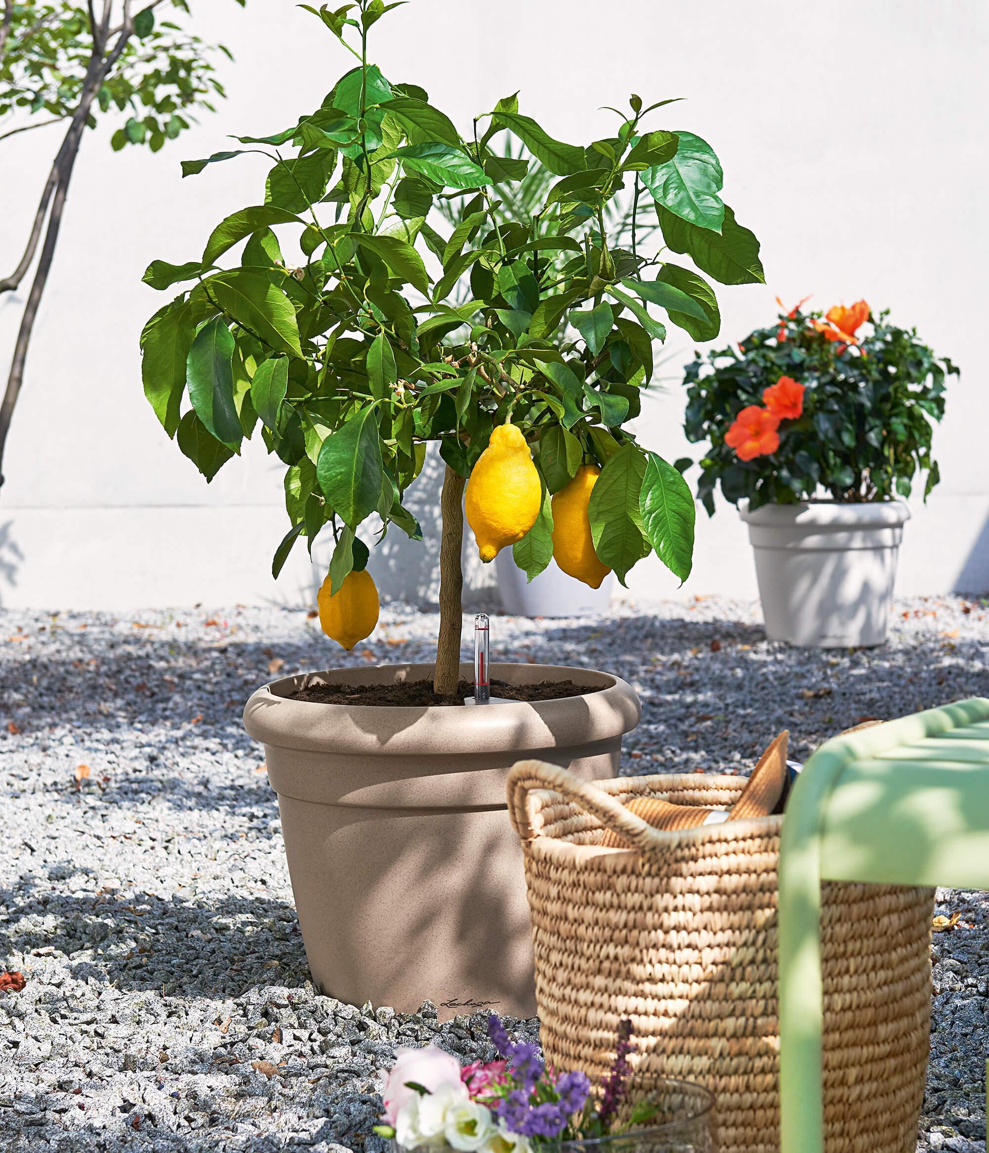 le_tw-urban-gardening_rustico35_sandb