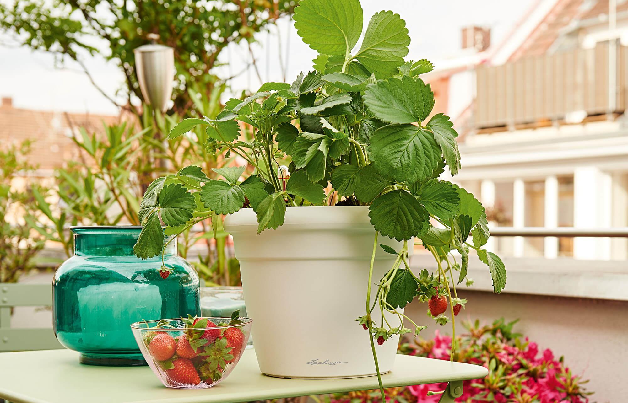 le_tw-urban-gardening_rustico_w