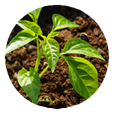 jonge planten