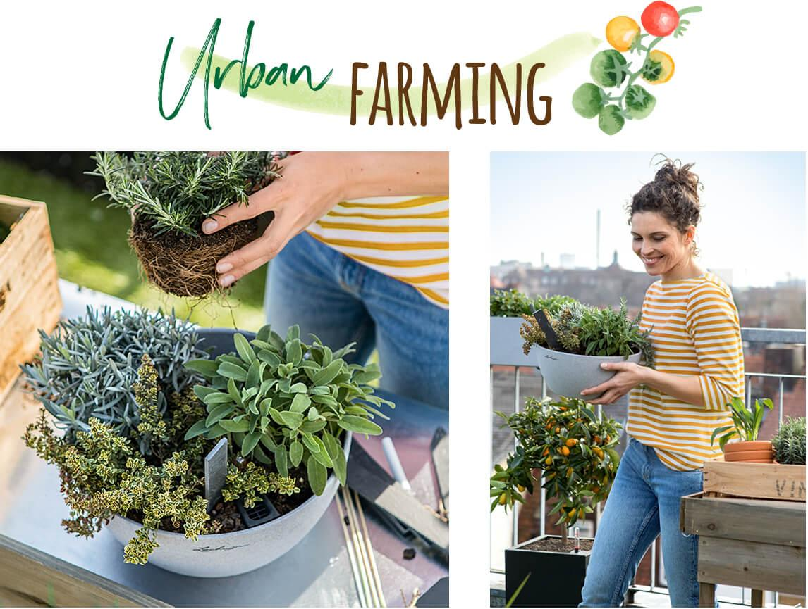 Urban Farming με CUBETO