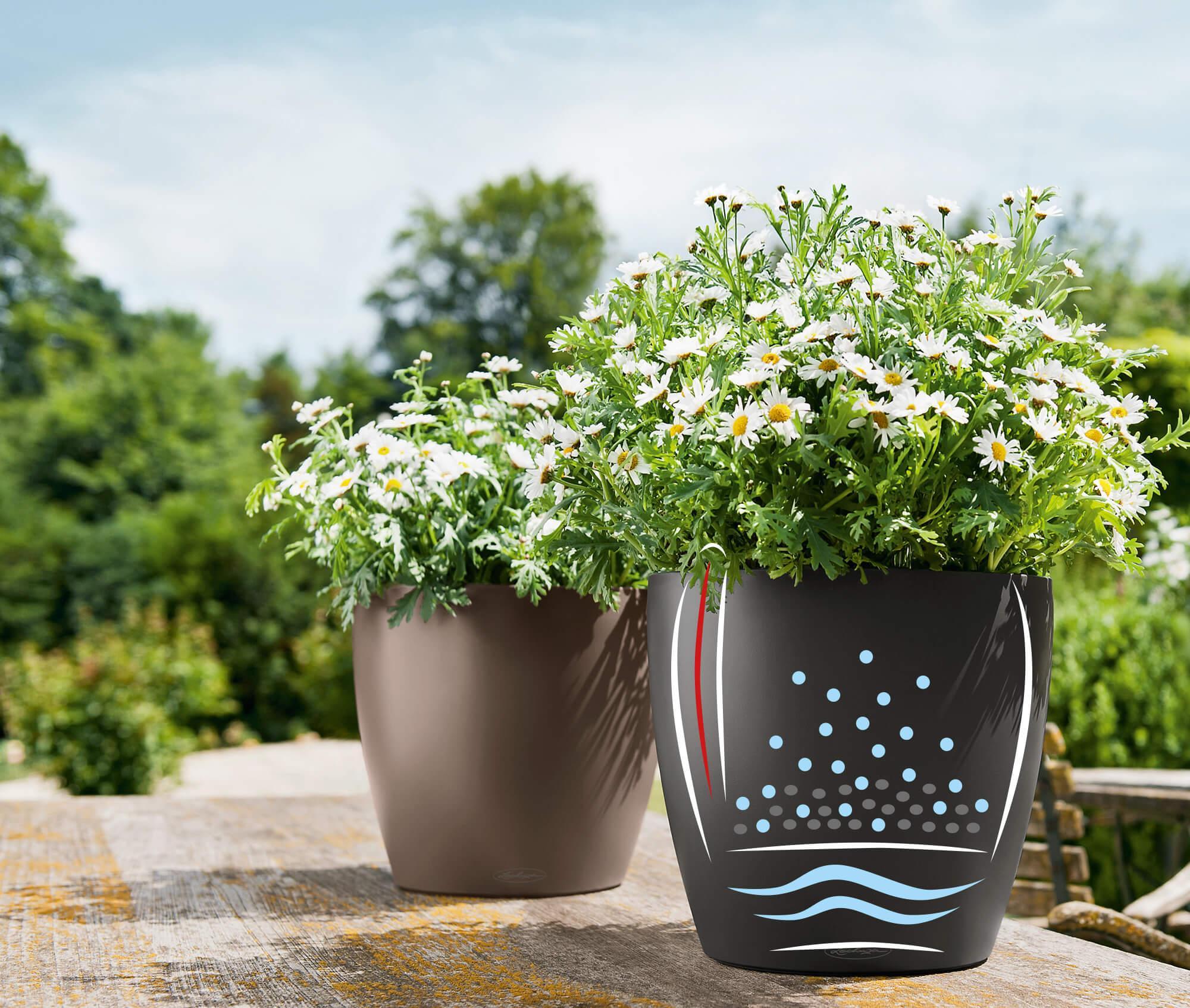 endlich urlaub so bleiben ihre pflanzen frisch und gr n. Black Bedroom Furniture Sets. Home Design Ideas