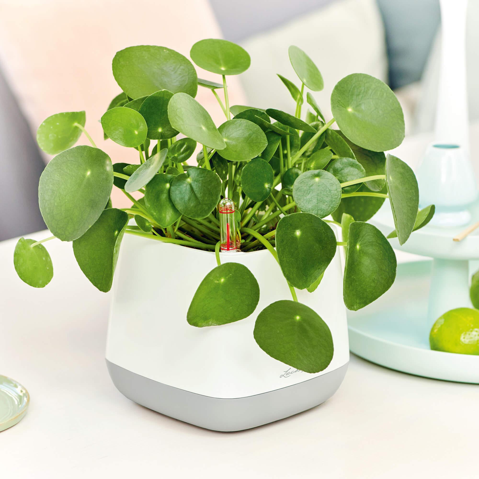 Maceta YULA blanco/verde pistacho satinado - Imagen 6