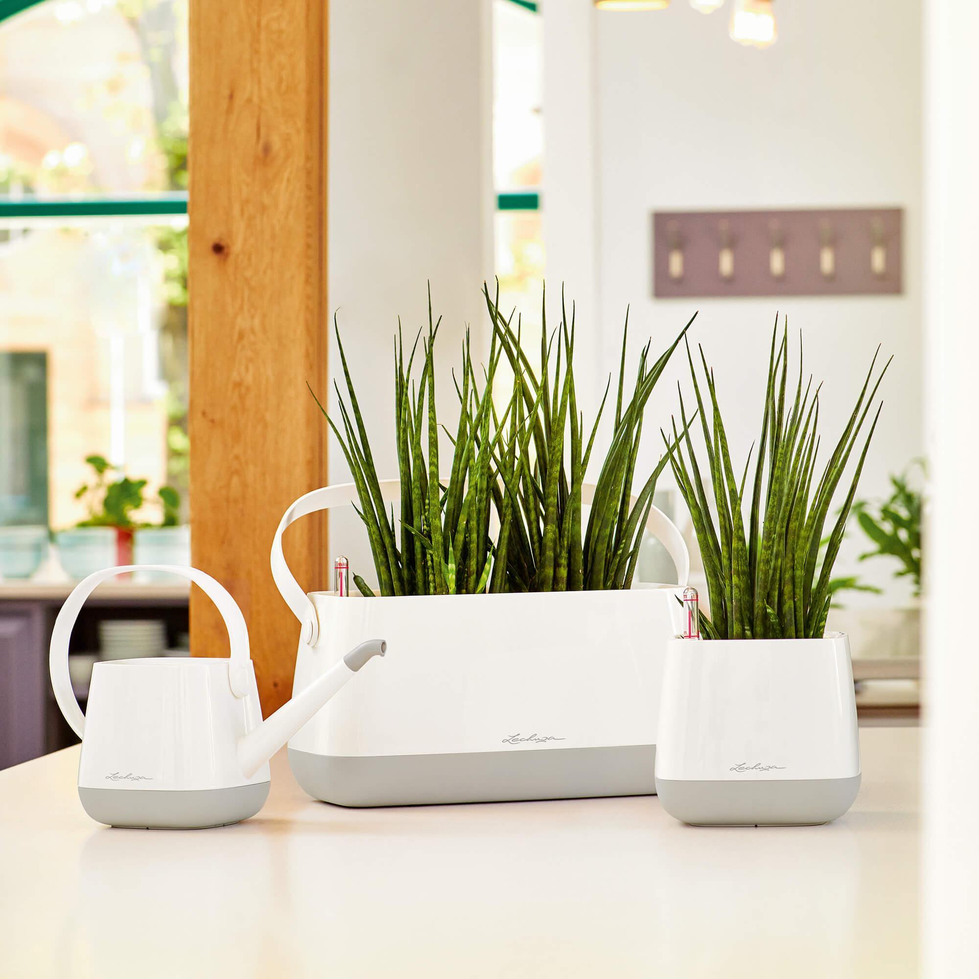 Borsetta per piante YULA bianco/grigio semi opache - Immagine 7