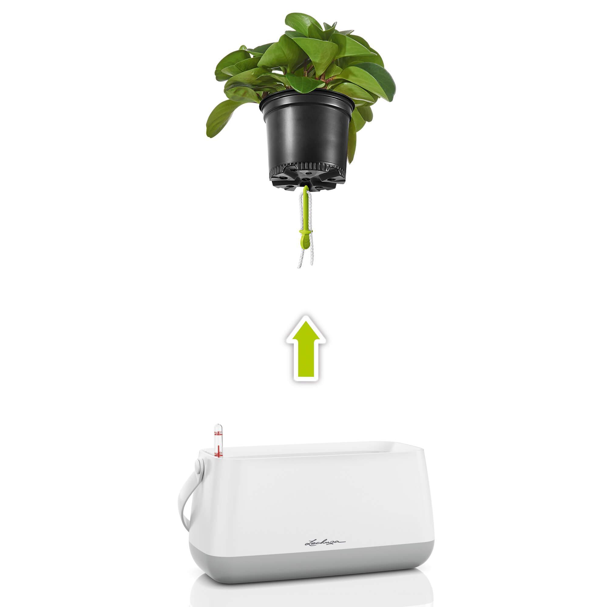 Borsetta per piante YULA bianco/grigio semi opache - Immagine 3