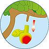 4146-A featureimage Les pommes se détachent