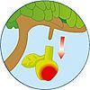 5120-A featureimage Äpfel ernten