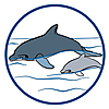 6981 featureimage Dolphins float