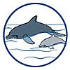 6981 featureimage Os golfinhos flutuam