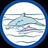 70094 featureimage Delfine schwimmen