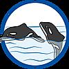 70183 featureimage L'orque peut nager de 2 façons différentes