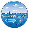 7654 featureimage schwimmt