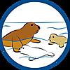 9069 featureimage Robben schwimmen