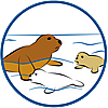9069 featureimage Zeehonden zwemmen