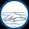 9133 featureimage schwimmt